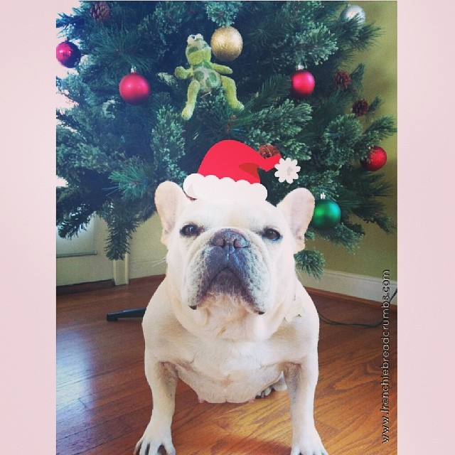 It's almost Christmas and I don't see my gifts yet! Have you finished your holiday shopping? Get 15% off with code HOLIDAY15 www.frenchiebreadcrumbs.com/shop/
