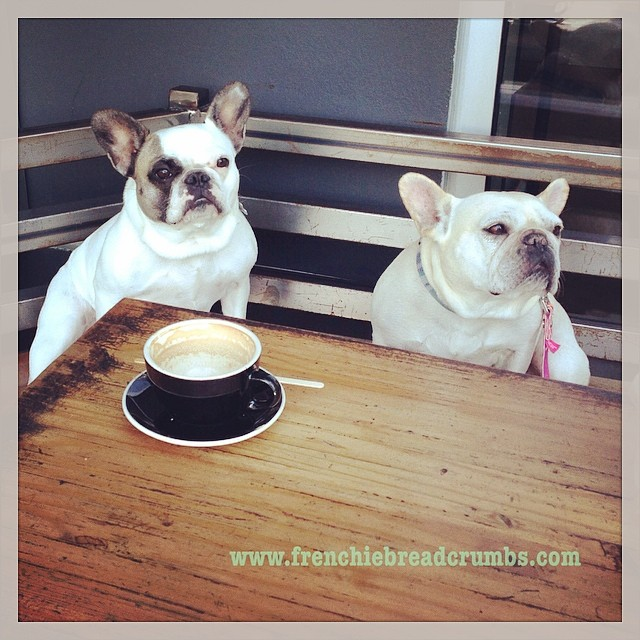 Grabbing a cup of joe with the bestie to chat about our crazy weekend plans! #tgif #frenchiefriday #flashbackfriday #coffeecommissary