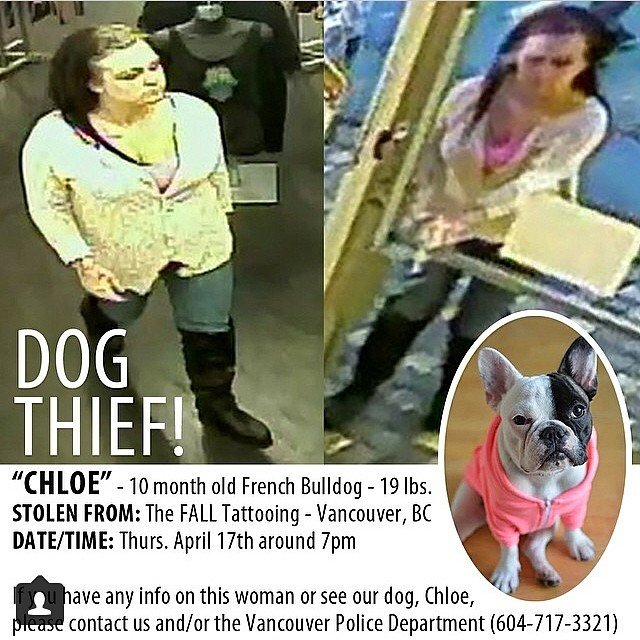 On Thurs, this horrible person stole little Chloe (@littlebabychips) from The Fall Tattooing shop! If you have any information or can identify this woman, please call VPD and help bring Chloe home! #stolenfrenchie