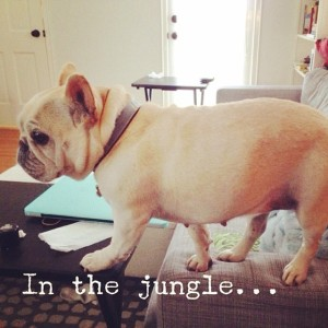 the-mighty-jungle-a-Frenchie-roams-tonight-Yes-I-am-a-stealthy-huntress-lionkingtwist-disney-happyhu