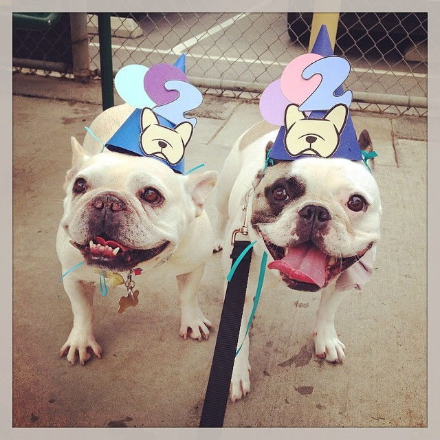 Party hats with Bruno on top make us deliriously happy! #babybruno @cyjeanlin