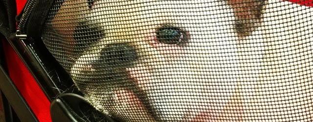 FrenchieBreadCrumbstagram! Cute French Bulldogs Blog