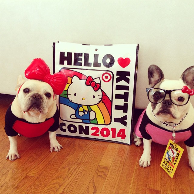 We couldn't get in to the event of the century, even with all our HK spirit. But, at least we got some swag! #hellokittycon #hkcon2014 #hellokitty #frenchie #fab_frenchie #fab_frenchies #fancyfrenchies #igpet #instagood #instamood #instafrenchie #igbulldogs_socal #latergram #buhi #buzzfeed #mannysbuddyoftheweek #bobasbuddies #barkleyshomies