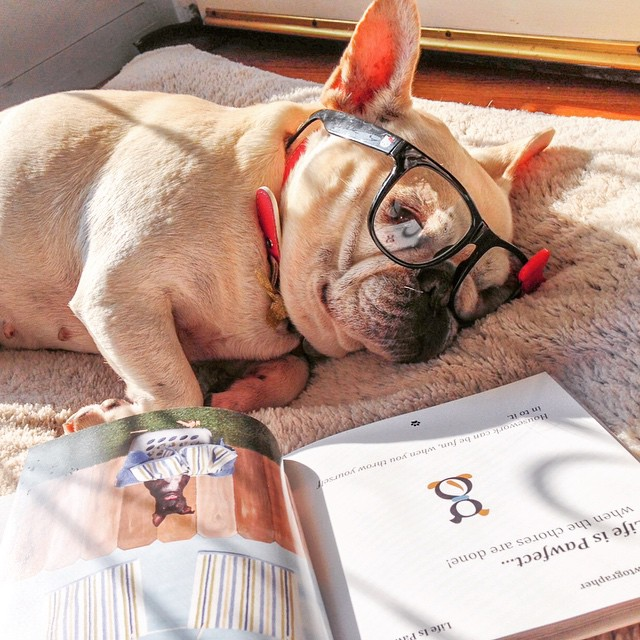 Mondays are stressful! Trying to catch up on my literatures and falling asleep in the process! #thepawtographer #goodreads