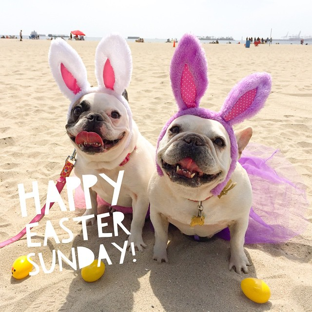 This is how we do Easter in Southern Cali! #eastersunday #springbreak #rosiesdogbeach