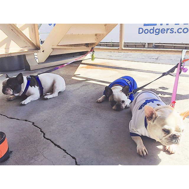 We're a coupla' hot dogs! Loved hanging out with ya in the shade @mrbobabear! #dodgerdogs #coolingoff #pupinthepark #mlb