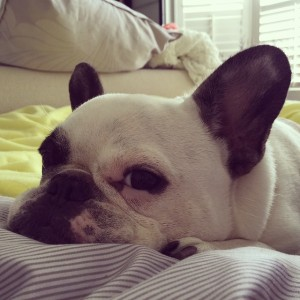 Call-me-when-breakfast-is-ready-Ma.-lazypiglet-slavetomyfrenchie