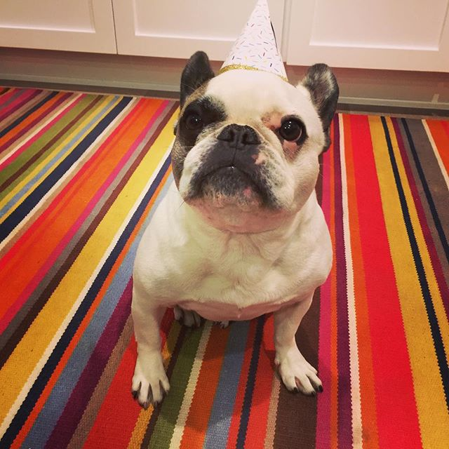 Our mischievous, strong-willed fur ball turns 7!  She has been with us through the best and worst times. Grateful for each and every day with her. We love you, Tofu! May all your days ahead be filled with ear/butt scratches and treats! #HBD #latepost